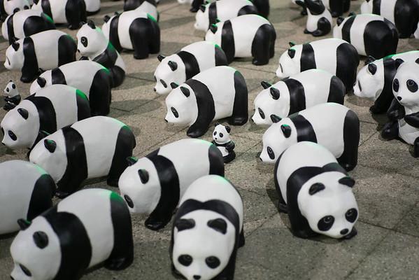 1600 Pandas HK
