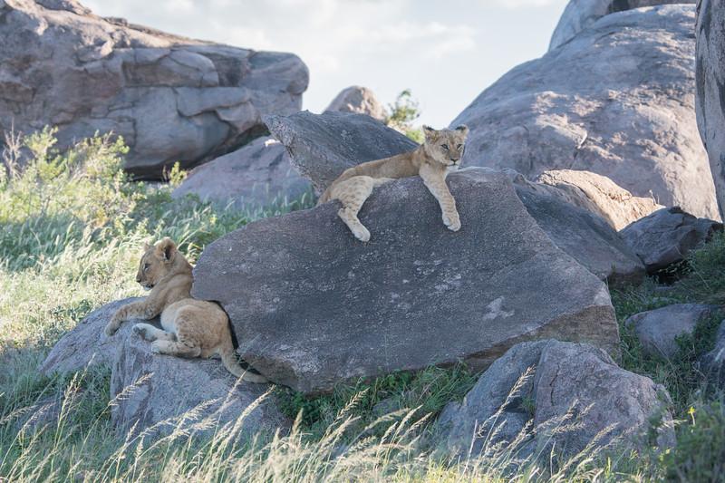 Tanzania_Feb_2018-612.jpg