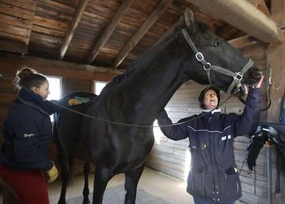 Strongwater Farm horses Tewksbury 010820