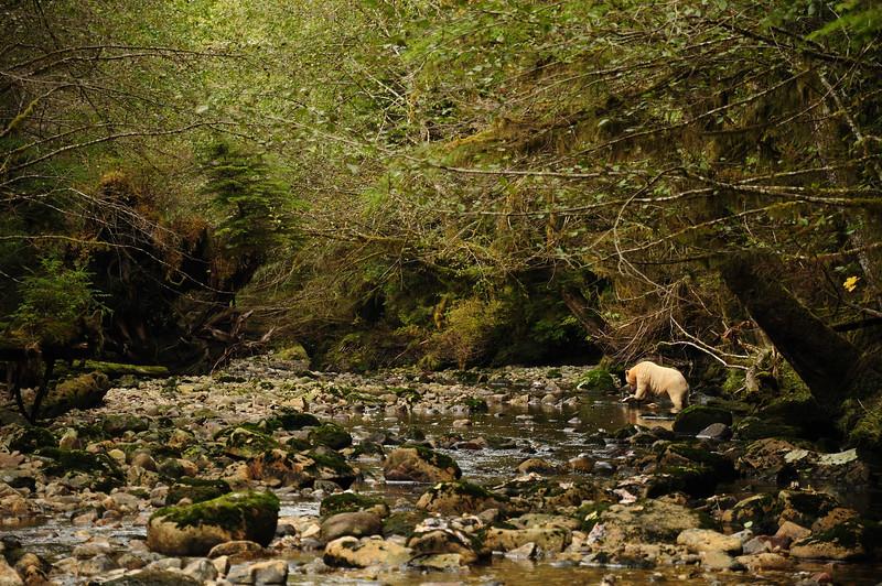 Kwa Creek