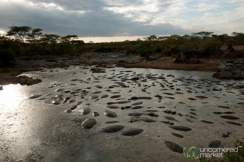 Hippo Pool at Dusk - Serengeti, Tanzania