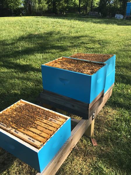 Bee Pics