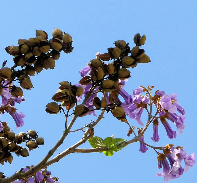 Day5-Purple w blue sky.jpg