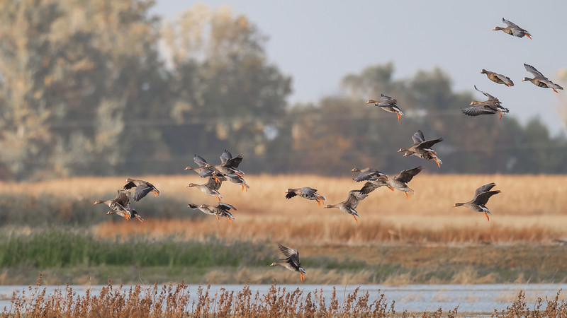 Merced National Wildlife Refuge - Merced, CA USA