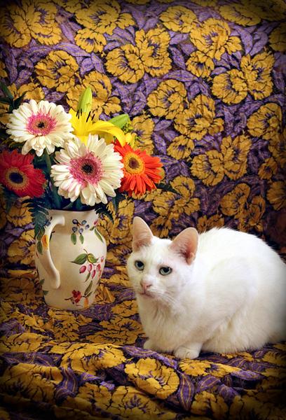 Van Gogh Nellie