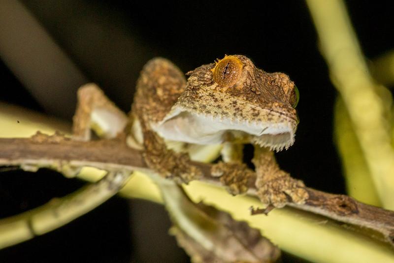 Madagascar_2013_FH0T2888.jpg