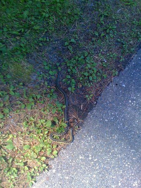 Vermont Border AT Snake