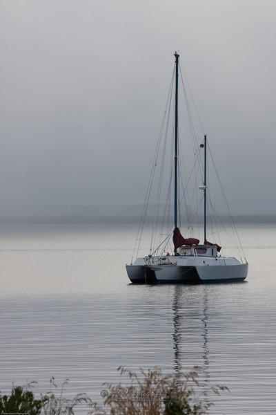 Foggy Sail-9646