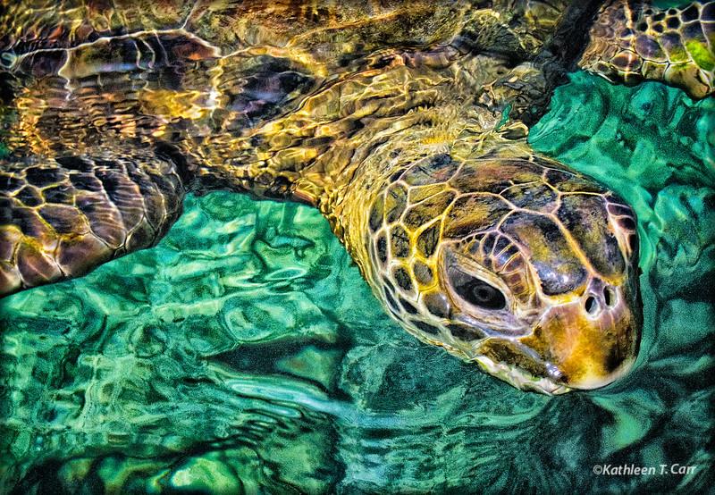 Turtle Closeup_1853adj2DE.jpg