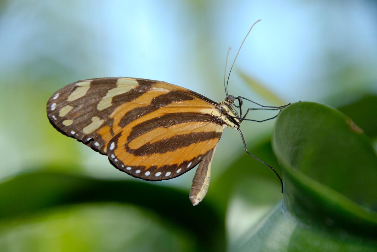 0001 - Butterfly World - Key West-001