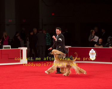 2018 NATIONAL CHAMPIOANSHIP HOUND GROUP