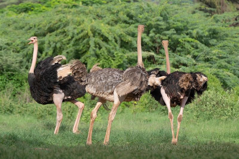 Jay Waltmunson Photography - Kenya 2019 - 094 - (DSCF1962).jpg