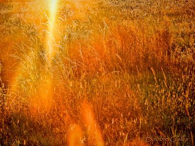 Golden Hour, ©Bobbie Gallia