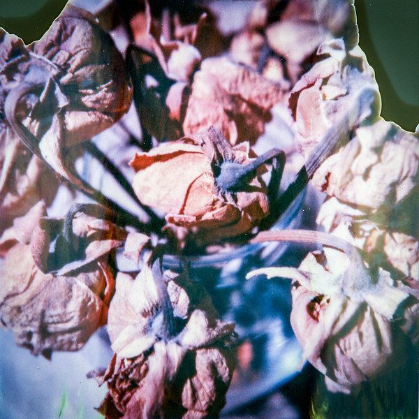 polaroid-glass-flowers013.jpg