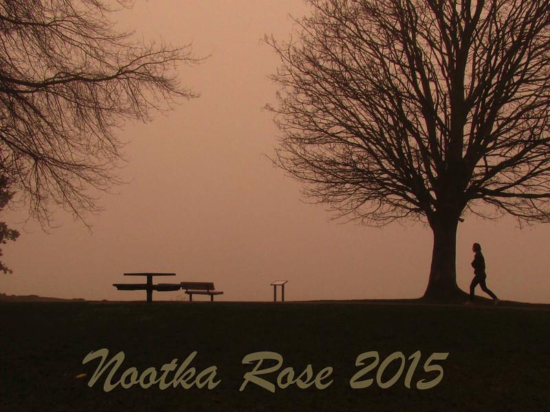 Nootka Rose 2015 Watermark.jpg