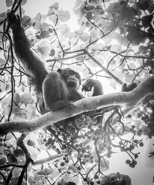 Uganda_T_Chimps-1350.jpg