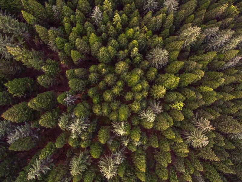 Aerial Trees.jpg