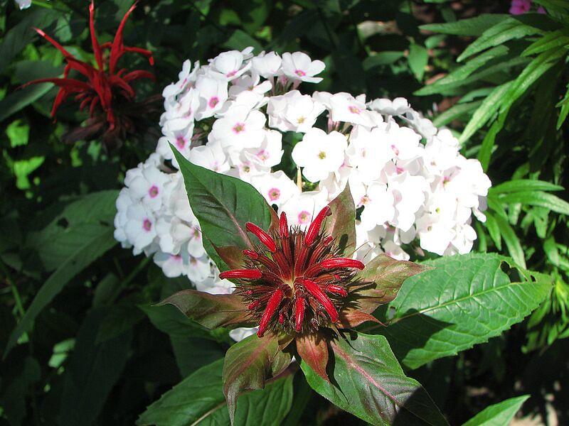 garden-2007-06-0606_std.jpg