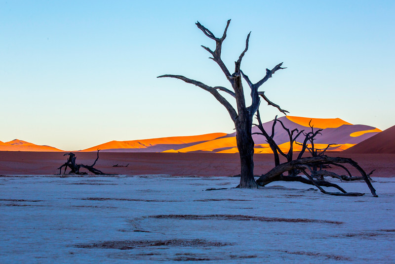 An ancient long-dead sun-blacked camel thorn tree at Deadvlei