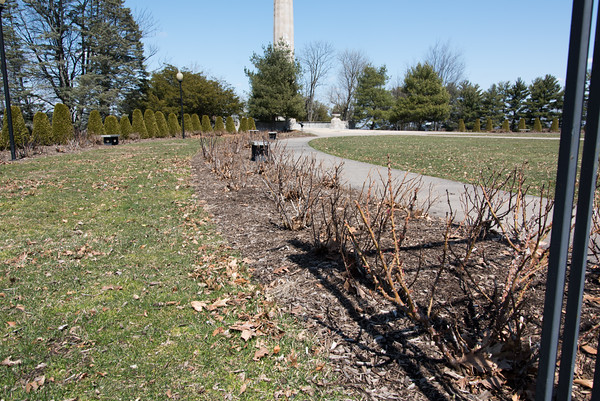 04/11/18 Wesley Bunnell | Staff The Rose Garden in Walnut Hill Park on Wednesday afternoon which just underwent a recent clean up.