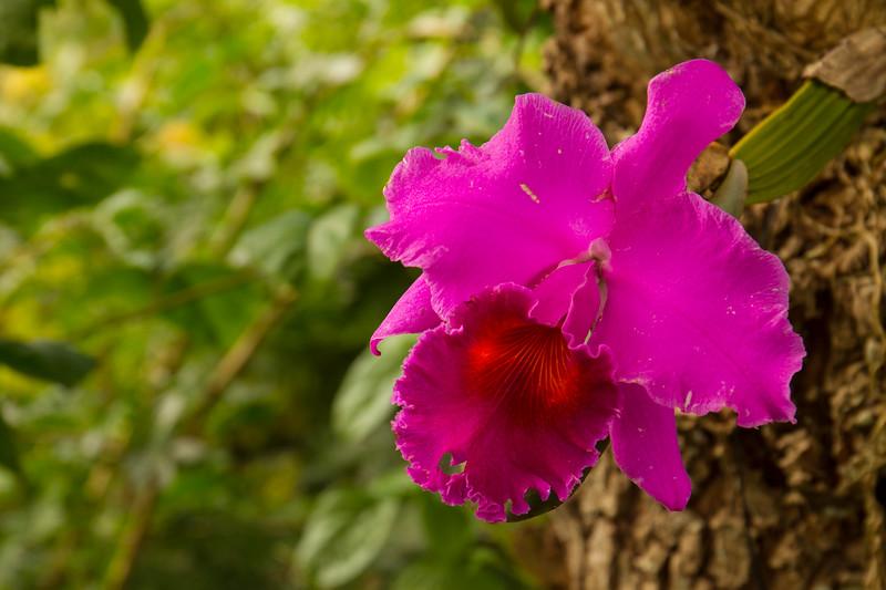 nanaples_botanical_garden_0008-LR.jpg