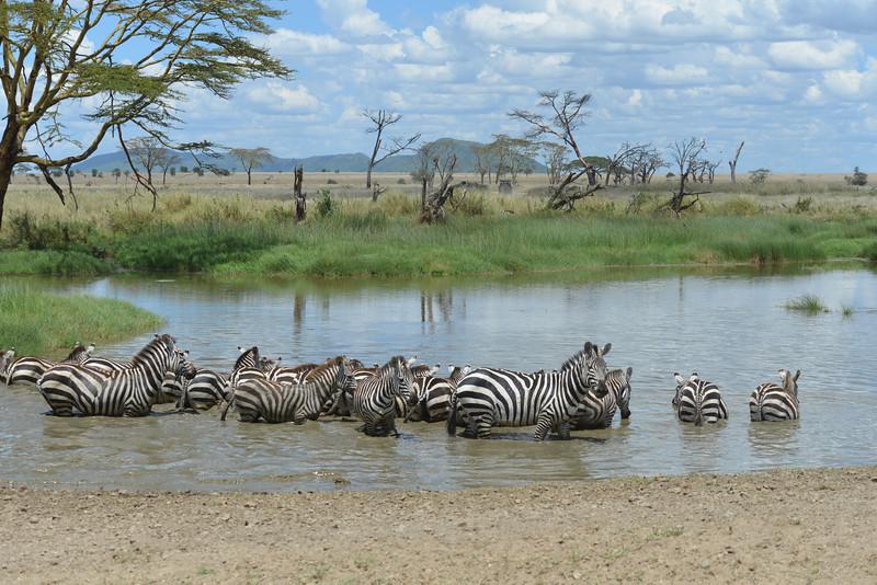 East Africa Safari 339.jpg