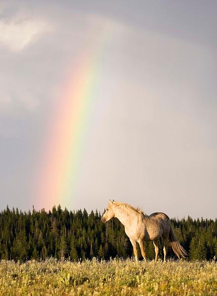 Cloud under the Rainbow - Pryor Mtn Wild Mustang