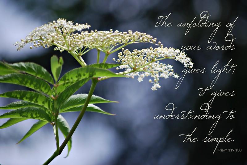 19_Psalm119-130_BS_2017-6-24.jpg
