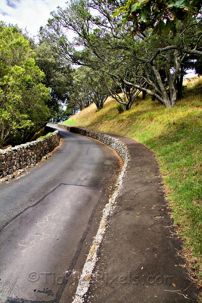 Road up Mount Eden