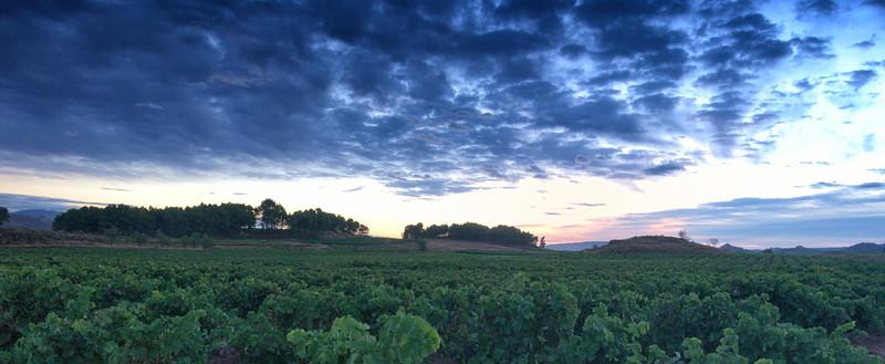 Vineyard Dawn