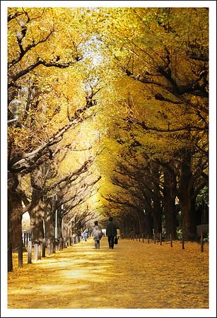 Gaien Ginkgo Trees