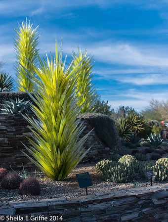 Desert Botanical Garden_Nature and Art  2014 - A Day in the Garden