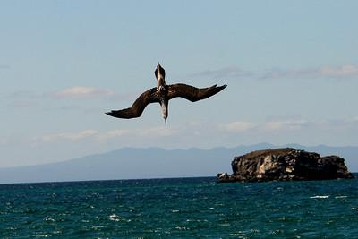 Galapagos Islands 2006