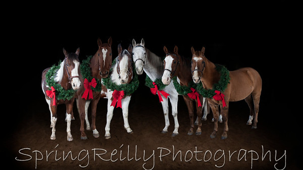 Sweetwater Christmas Card