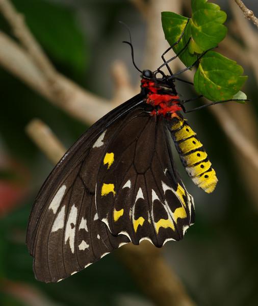 Birdwing-7640.jpg