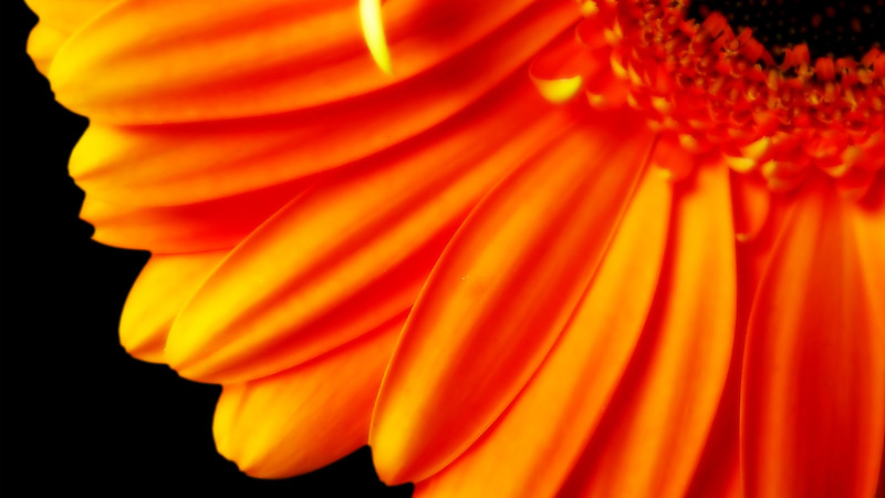 Flowers2 1920x1080 (29).jpg