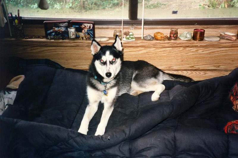 Clea at home in the San Juans.jpg