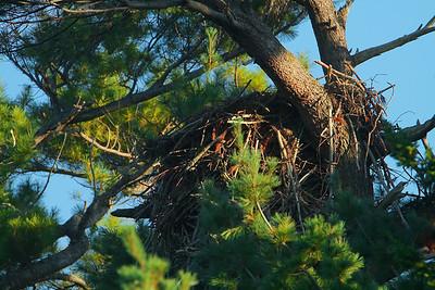 Hay Field Nest