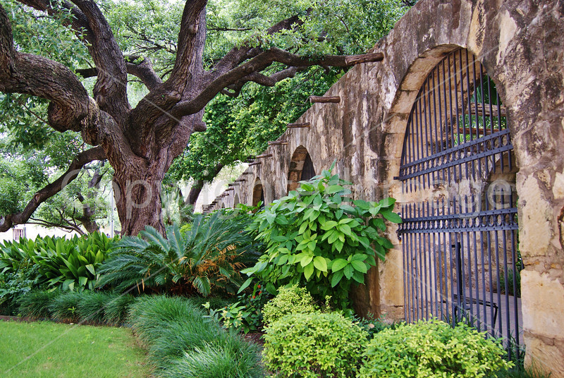 #92 Wall and tree at the Alamo.JPG