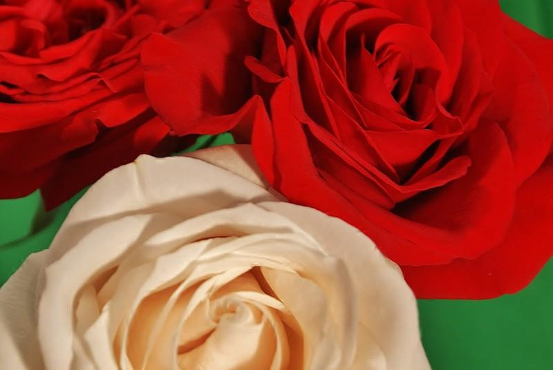 Roses 006.JPG