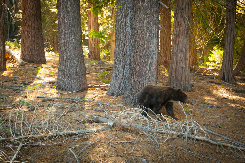 20140826_sequoia_0369.jpg