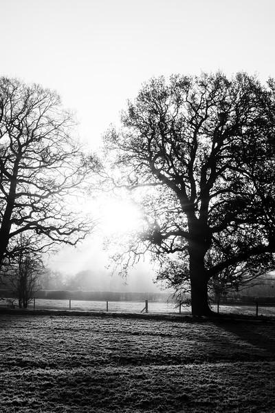 A frosty start (13 of 20).jpg