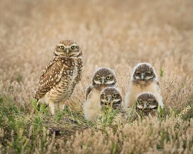 Eagles, Owls & Hawks