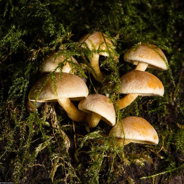 Fungi in Moss