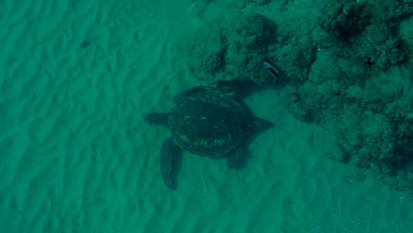 Day 8: Snorkeling At Black Rock