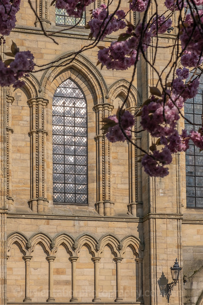 Ripon Cathedral & cherry blossom-56.jpg