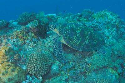 2018 綠島潛水團