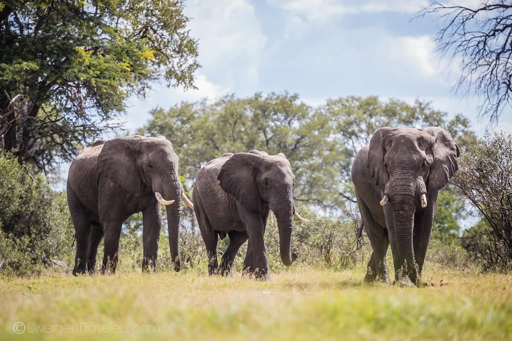 Best Safari in Africa - elephant