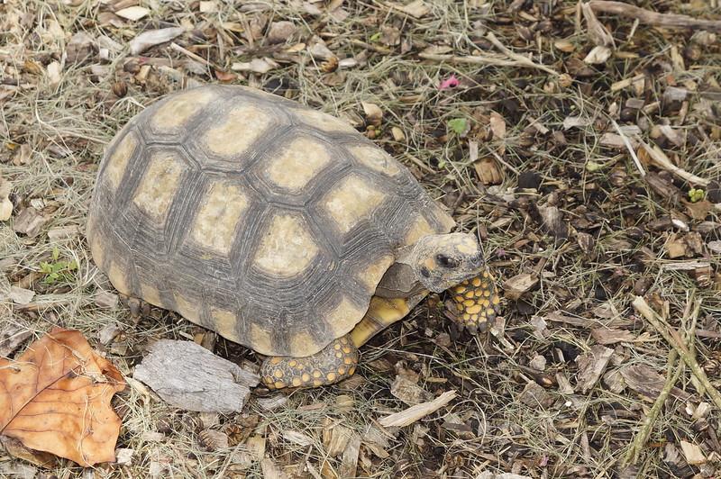 Pine_Tree_Hill_Wildlife_Rescue (71).JPG