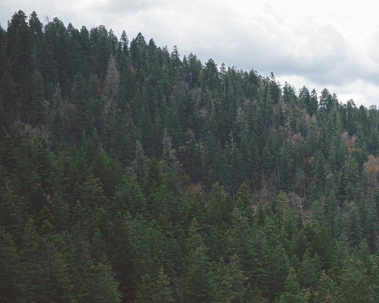 Cloudcroft - New Mexico-4704.jpg